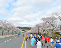 さくらマラソン/イメージ