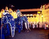ペラヘラ祭/象の行進(イメージ)