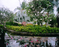 バリ島(フリータイム/イメージ)